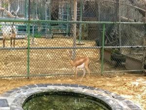 dubai-zoo1
