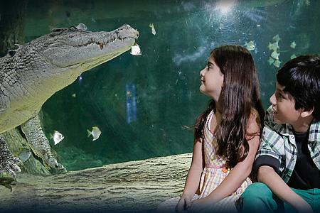 King-Croc