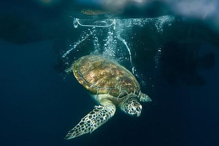 Turtle-Rehabilitation