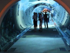shark-tunnel-dubai-aquarium-RS